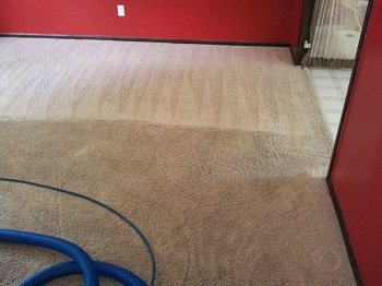Carpet Deodorizing
